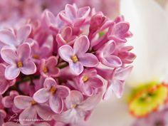 Pasje rzeszowianki:  Wiosna jest najpiękniejszą porą roku, wszystko kw...