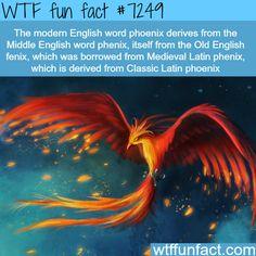 Phoenix - WTF Fun Fact