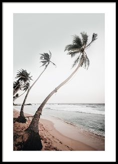 Beautiful motif of a peaceful beach in Sri Lanka. The poster comes in earthy tones that are wonderfully broken against the white Poster Mural, Poster Prints, Wall Prints, Photo Pop Art, Poster 40x50, Poster Xxl, Gold Poster, New York Poster, Nature Posters