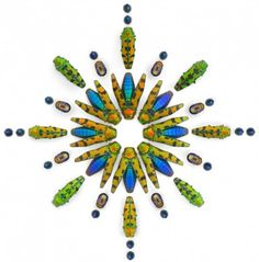 Insect Artwork by Christopher Marley Christopher Marley, Insect Photos, Beautiful Bugs, Insect Art, Natural Forms, Natural History, Wind Chimes, Hair Accessories, Colours