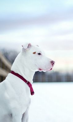 480x800 Wallpaper dog, snow, winter