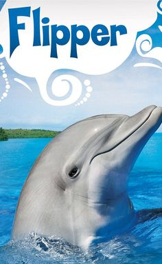 Flipper (1964–1967) Created by Jack Cowden, Ricou Browning.  With Brian Kelly, Flipper, Luke Halpin, Tommy Norden. Ranger Porter Ricks is responsible for the animal and human life in Coral Key Park, Florida. Stories center on his 15-year-old son Sandy and 10-year-old Bud and, especially, on their pet dolphin Flipper.