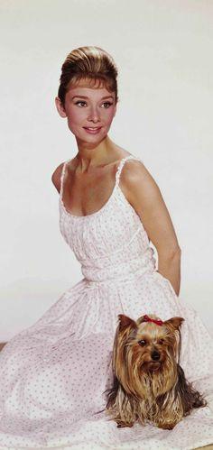 Audrey Hepburn peopl, icon, celebr galleri, pet, audrey hepburn, audreyhepburn, idol, classic, hepburn dress