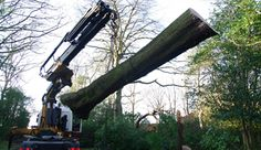 hello friends, I am living in Glasgow and was searching good tree surgeon at that time I met with very good team known as shiretreesurgeons which is fast and reliable tree surgeon in Glasgow.