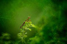 Green World by Fauzan Maududdin