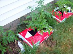 1000 Images About Tomato Grow Bags On Pinterest Growing 400 x 300