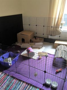 Rabbit Housing Gallery