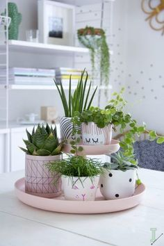 Tischdekoration-selber-machen-mit-Blumentöpfen Table Decoration themselves-are-with-flower pots Cacti And Succulents, Potted Plants, Green Plants, Cactus Plants, Hanging Plants, Cactus Decor, Air Plants, Flower Plants, Diy Hanging