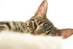 Unsere vierbeinigen Begleiter  Teil 5: Dafne Switzerland, Cats, Blog, Animals, Gatos, Kitty Cats, Animaux, Animal, Cat