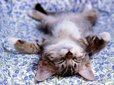 cat pictures | Knight Cat Picture: little cats sleep on their backs