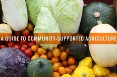 This guide to CSAs covers how to find a CSA in your area, how to afford it and what to do with all that fresh produce. Vegetarian Breakfast, Vegetarian Recipes Dinner, Vegetarian Cooking, Health And Nutrition, Health And Wellness, Food Facts, Organic Recipes, I Love Food, Cooking Tips