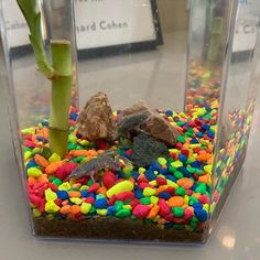 """Kristen Howerton on Instagram: """"We are a week in with our new African dwarf frogs and I'm here to report . . . these have to be the most low-maintenance pets ever. I was…"""" Dwarf Frogs, Low Maintenance Pets, African, Homes, Kids, Instagram, Young Children, Houses, Boys"""