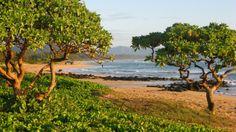 Beach on Kauai Kauai, Golf Courses, World, Beach, Photography, Travel, Photograph, Viajes, The Beach