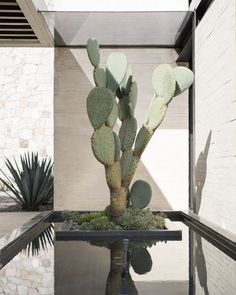 Galería de 3 oficinas mexicanas de paisajismo que tienes que conocer - 92