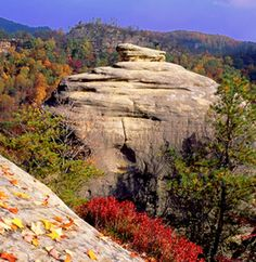 Red River Gorge,This intricate canyon system features an abundance of high sandstone cliffs, rock shelters, waterfalls, and natural bridges. There are more than 100 natural sandstone arches in the Red River Gorge Geological Area. The multitude of sandstone and cliff-lines have helped this area become one of the world's top rock climbing destinations and is home to the Red River Gorge Climbers' Coalition.
