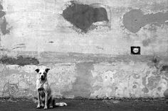 Cat and dog byRussian artist Alexey Menschikov (@a.menschikov) who constructs surreal dreamlike scenes drawn from ordinary life. // #street #fineartphotography #artphotography #contemporaryphotography #blackandwhiteisworththefight #monochrome #streetphotograhy #surreal #blackandwhite #portrait #minimal #learnminimalism #mindtheminimal #minimal_perfection #symmetricalmonsters