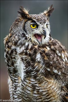 Eagle Owl by Wanderingval :-)  on 500px