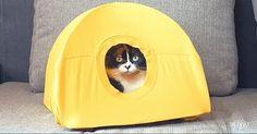 how to make a cat tent - http://9gag.com/gag/aVP672K