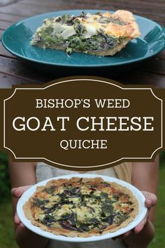 Bishop's Weed Goat Cheese Quiche A great way to use wild vegetables. Ground Elder, is such a flavourful and nutritious plant. Better yet it's free. - A Spoonful of Fun Homemade Goats Cheese, Goat Cheese Quiche, Food Goals, Amazing Recipes, Tasty Dishes, Meal Ideas, Food Inspiration, Weed, Good Food