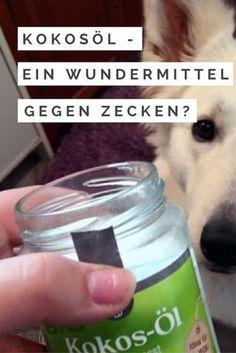 Besonders im Frühling fragen sich viele: Was hilft gegen die Zeckenplage am Hund? Hier erfahrt ihr es!