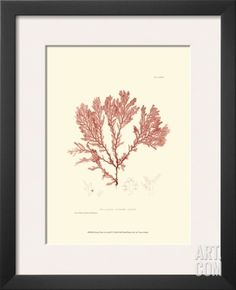 Nature Print in Coral IV Framed Art Print at Art.com