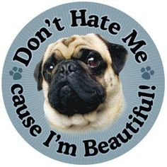 """""""Don't hate me because I'm beautiful"""" 5 7/8 inch magnet fawn  """"Don't hate me because I'm beautiful"""" 5 7/8 inch round Magnet! This is beautiful artwork on this magnet and it will stick were ever a magnet can stick. Show your pug pride and make a purchase. All proceeds benefit the pugs at Pug Rescue Network. Free shipping USA only!!"""