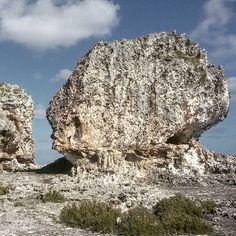 #rockyterraine #eleuthera #bahamas #outislands #bigrock #cowandbull #rockylandscape