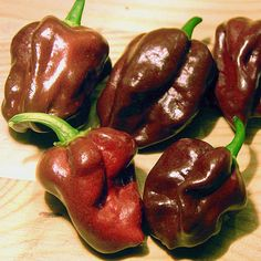 Chocolate Habanero. 425,000 - 577,000 Scoville Units.  There are several different names for these chilies: black Congo, dark habanero, Jamaican hot chocolate, black habanero, Senegal hot chocolate, and Cuban habanero just to name a few. The pods of chocolates tend to be slightly larger than your typical habanero pepper and have a unique, rich, smoky flavor.