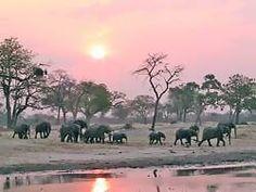 Hwange National Park, Zimbabwe. Never, ever thought I'd visit somewhere like this.