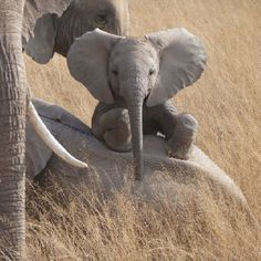 ○ Super cute baby elephant