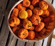 Rechercher dans les images de automne citrouille