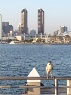 Downtown San Diego x Coronado Island. San Diego was overwhelming, very lively, so many attractions, it was amazing