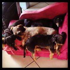 4 Rockstars napping