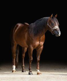 Allthatshines Is Joe - breeding information, stallion directory, studbook. Reining Horses, Dressage, Palomino, Equine Photography, Site Design, Frozen, Future, Animals, Future Tense