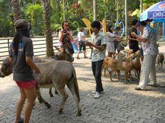 Deer in Nong Nooch, Pattaya, Thailand