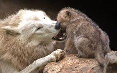 30 Pictures That Will Make You Fall In Love With Wolves