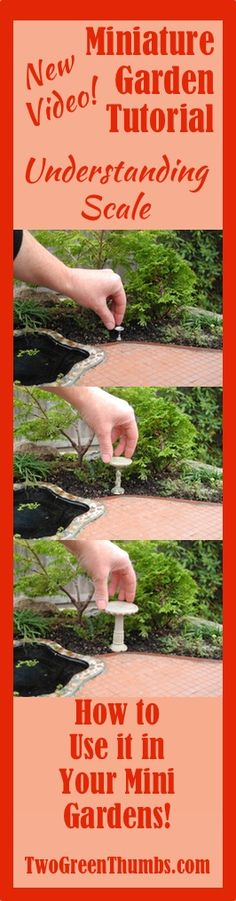 NEW VIDEO: Miniature Garden Tutorial: Understanding Scale in the Miniature Garden. Using different sized accessories confuses the scene and robs your miniature or fairy garden of the enchantment it could have. See how scale works in the mini garden in the short video tutorial by Janit Calvo of TwoGreenThumbs.com!