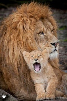 Top Ten Tourist Attractions In Kenya Lions Africans And - Photographer captures angry lion before attack