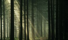 Photo Gallery - Hoia Baciu Forest World's Most Haunted UFO Forest Haunted Woods, Haunted Forest, Tree Forest, Magical Forest, Dead Forest, Most Haunted, Haunted Places, Hoia Baciu Forest, Cool Desktop