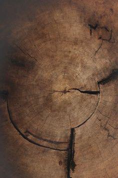 Wood design texture tree trunks 67 New Ideas Wabi Sabi, A Well Traveled Woman, Deco Nature, Wood Design, Textures Patterns, Craftsman, Creative, Photos, Beautiful