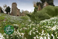 The Topiary Cat Among the Snowdrops. A Pretty Place to Lay One's Head in February. Garden Whimsy, Cat Garden, Garden Art, Garden Design, Garden Ideas, Topiary Garden, Gardening Magazines, Gardening Tips, Photo Restoration