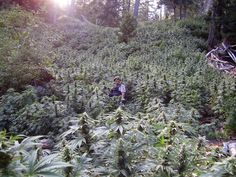 The Stoners' Paradise of Humboldt County Is Dreading Weed Legalization | Photo by Emily Brady #drugs #photo #pot #legalization