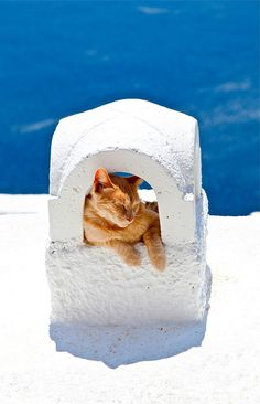 A Santorini cat | Greece.  The simply elegant combination of blue and white indicates this lazy cat's location!  Warm, salty air would lull me to sleep as well!