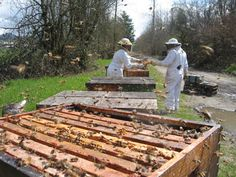 Over-night beehive splits - what a difference a day makes this spring