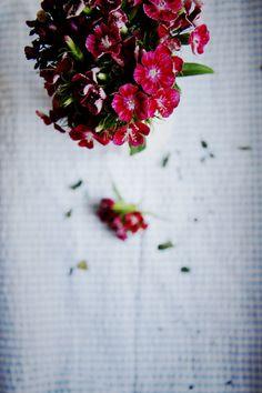 j'adore ces petites fleurs. je ne sais pas leur nom. #flower #pink #fushia