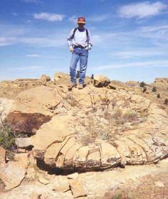 Fossil Ammonite - Twitter / cnsgpedro: ¡Lavín, cacho ammonite! Primo ...