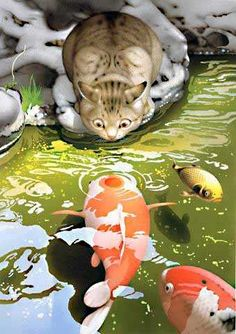 cat visiting with koi fish