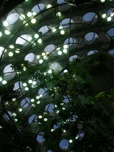 California Academy of Sciences by Renzo Piano