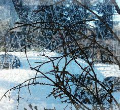 Eiskristalle Winterlandschaft