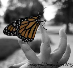 Butterfly New Life on Etsy, $10.00